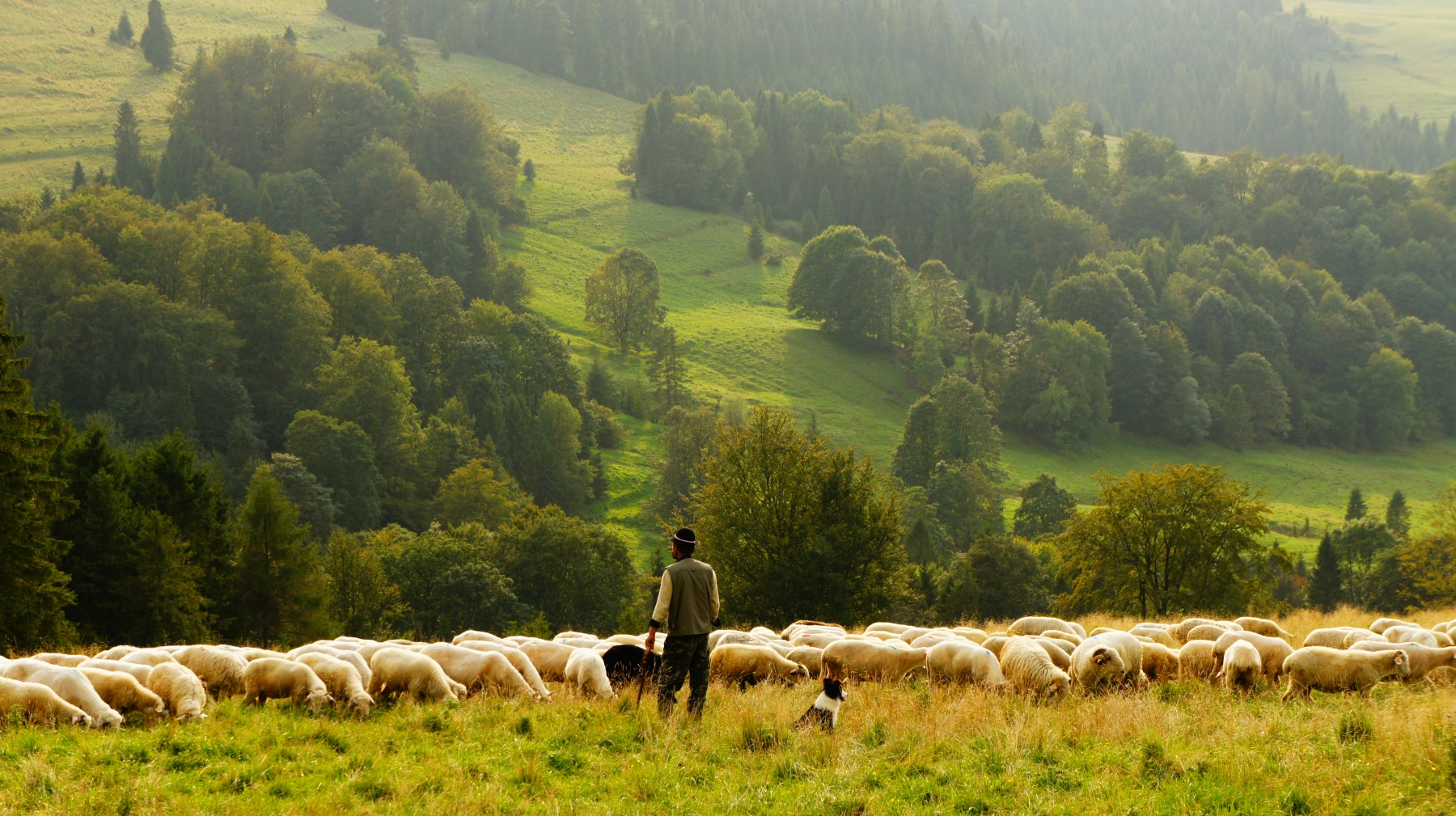 跳舞的羊,咖啡起源的浪漫騙局
