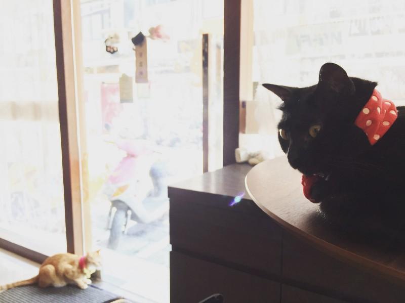 慵懶的貓咪們│ 喬茵咖啡