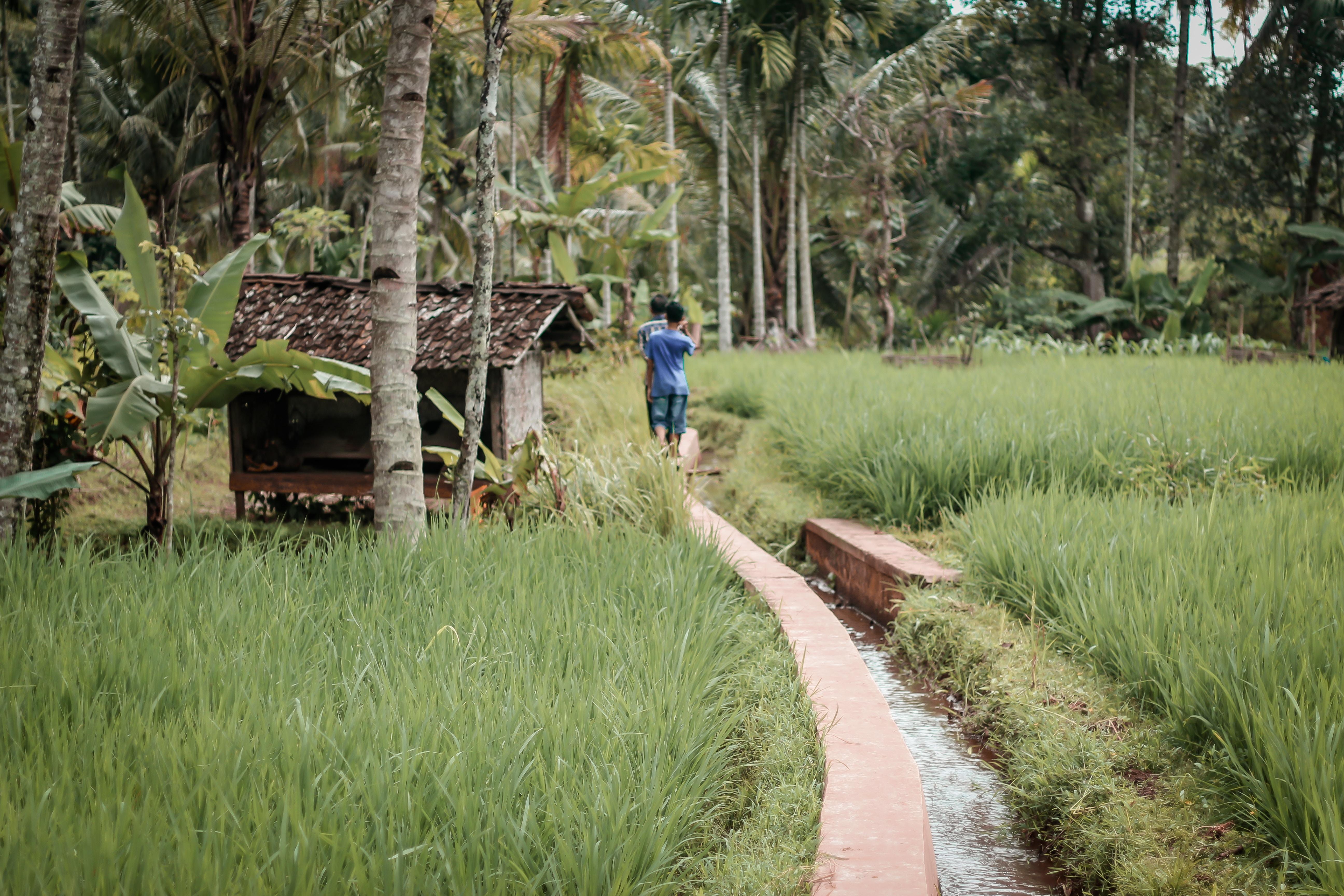 印尼鄉村農地