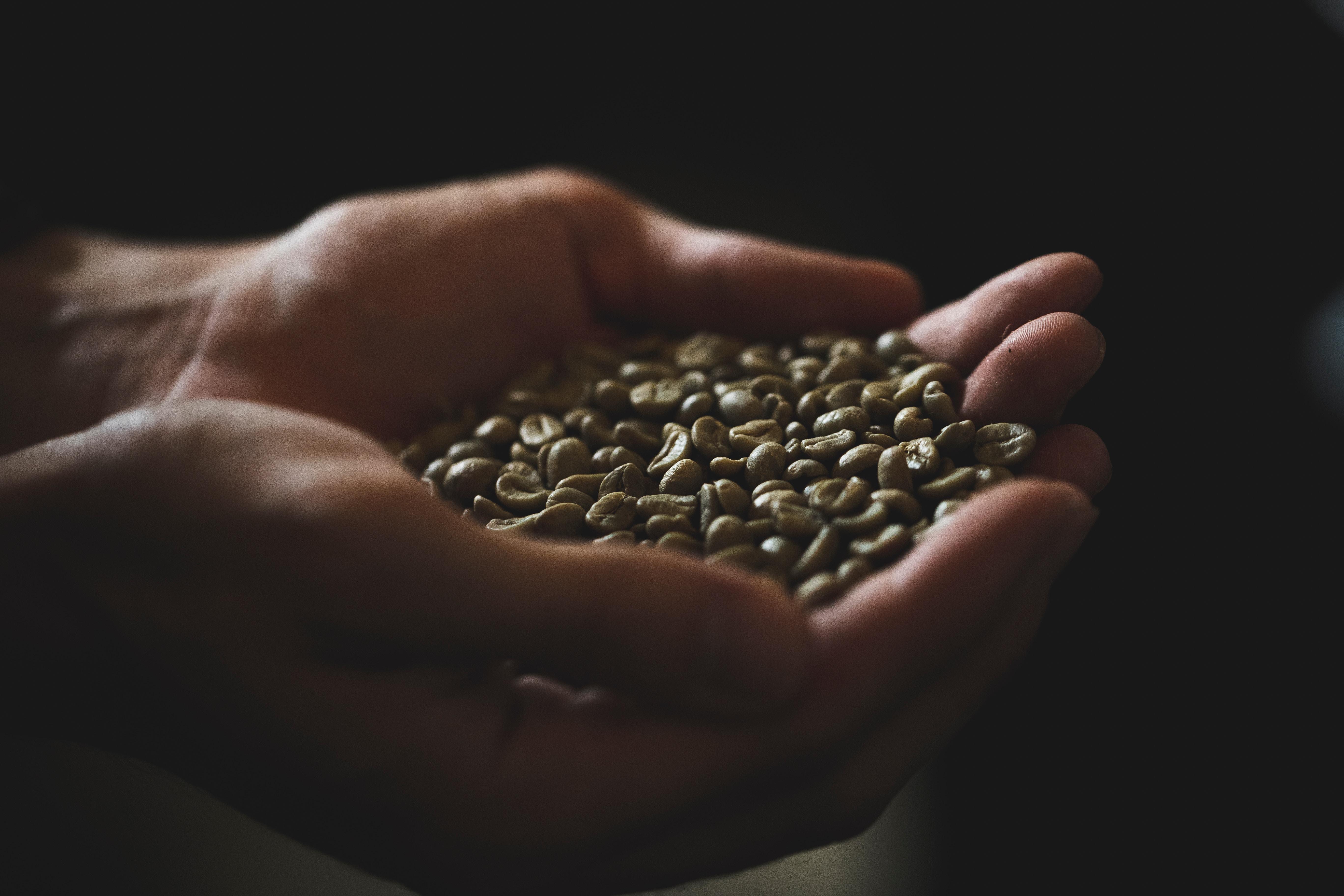 咖啡豆 曼特寧