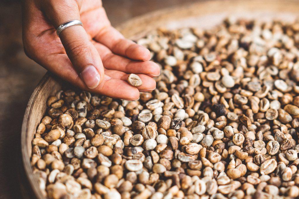 印尼咖啡豆挑選示意圖
