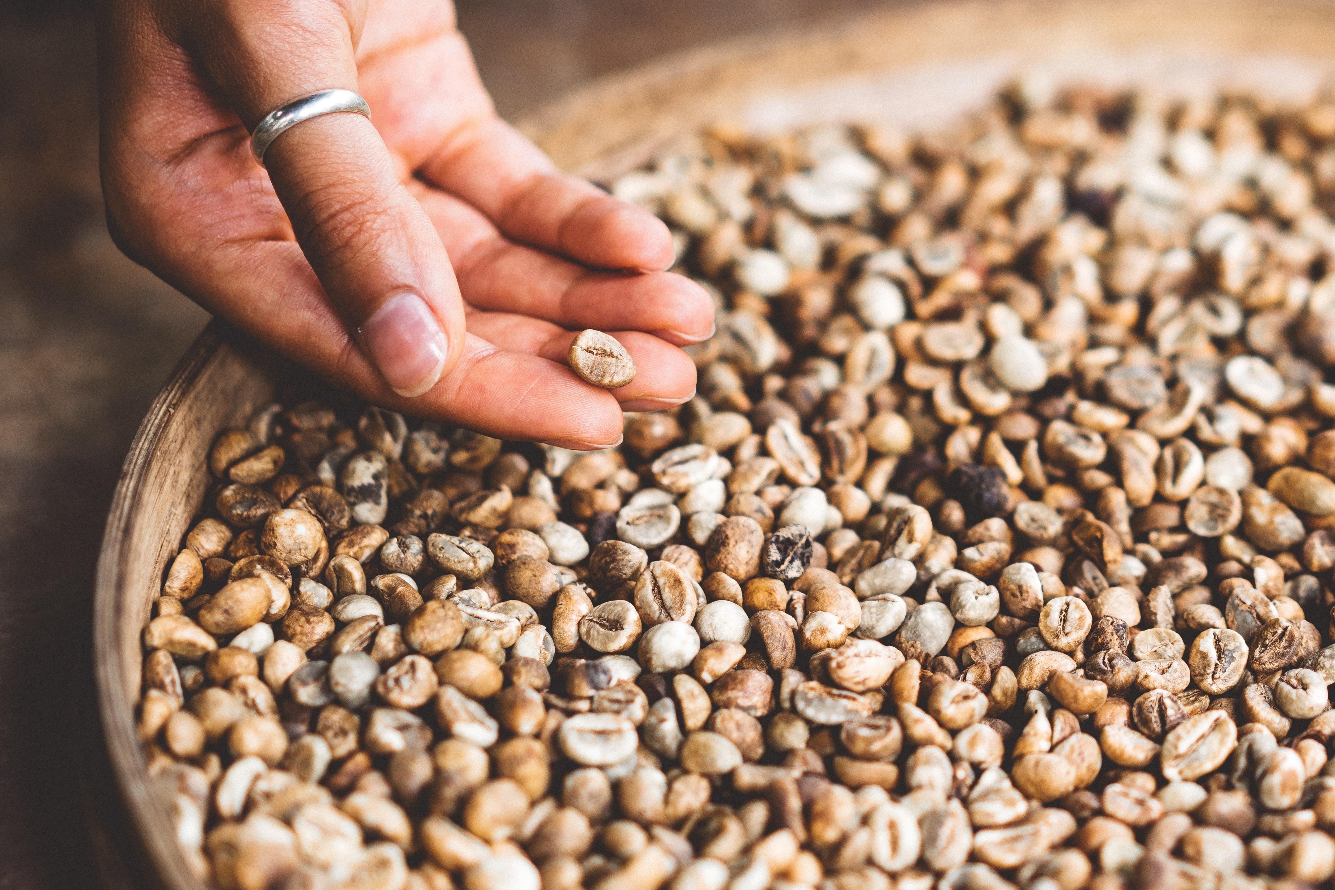 手挑咖啡豆
