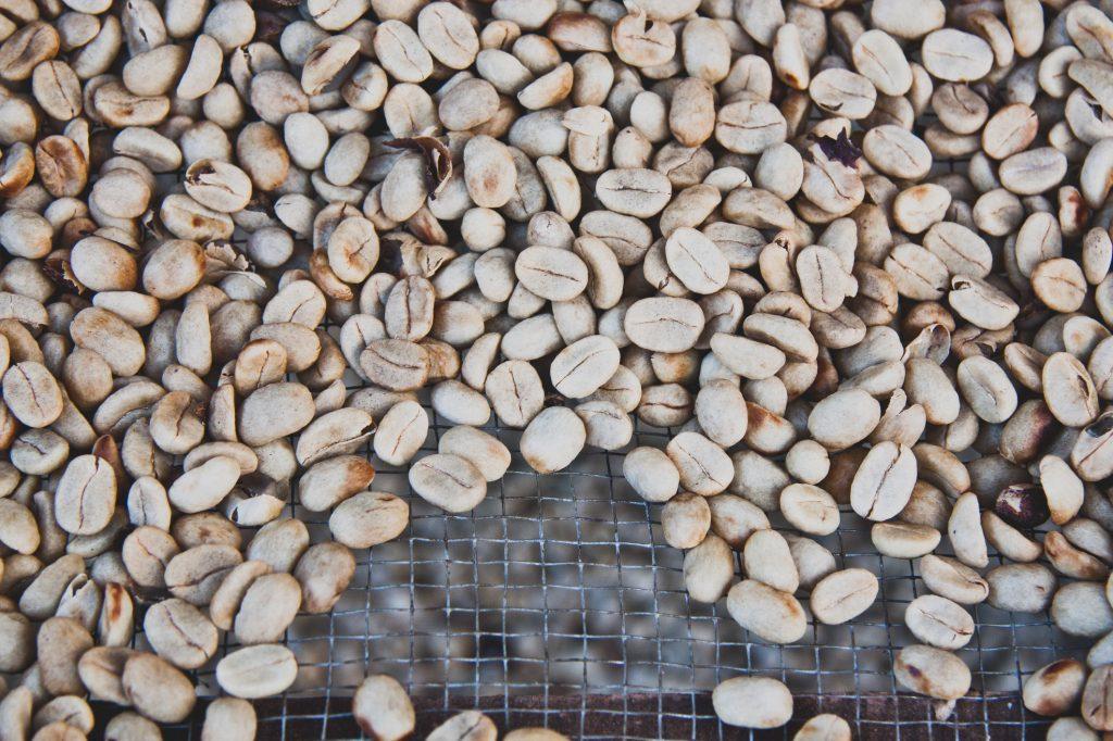 哥斯大黎加 咖啡生豆