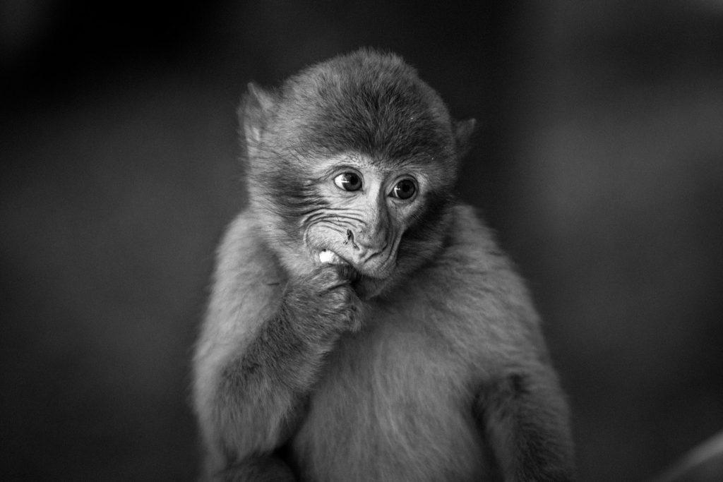 猴子吃東西示意圖 圖片來自unsplash