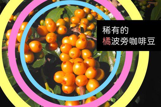 尼加拉瓜-橘波旁咖啡豆-咖啡市集-CoffeeMart-精品咖啡-咖啡豆-台灣-香港-澳門
