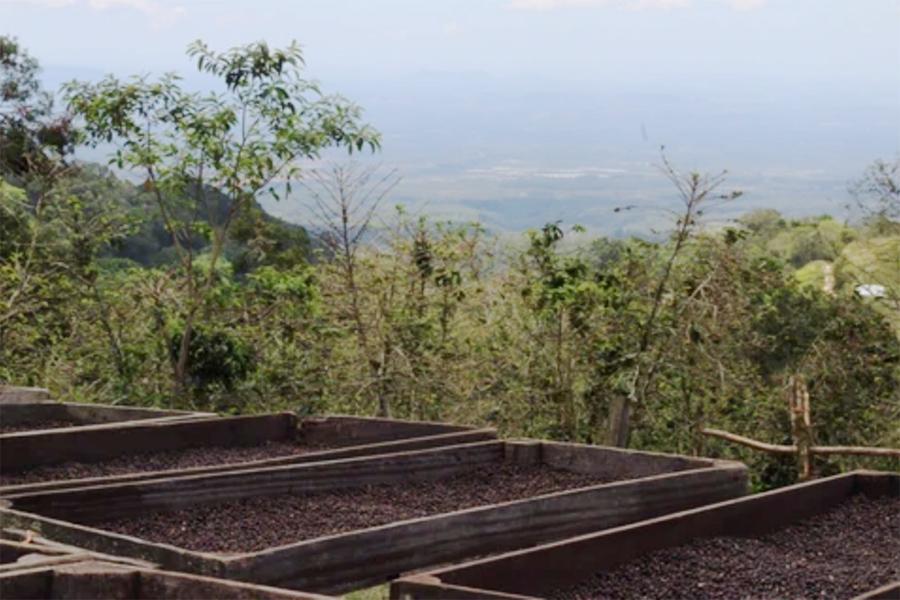 巴拿馬-日曬咖啡豆-Elida-Estate-精品咖啡豆-艾利達莊園