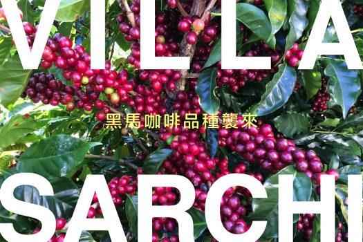 維拉薩奇 villa sarchi 咖啡豆 咖啡品種 咖啡市集