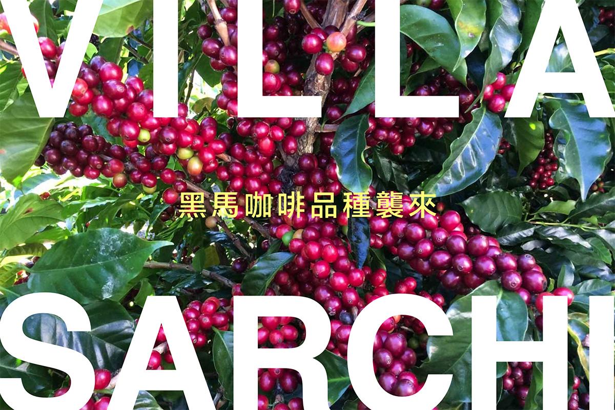 哥斯大黎加獨特競賽常勝品種: 維拉薩奇咖啡豆 Villa Sarchi