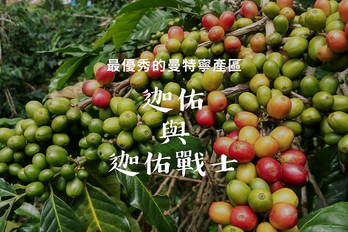 優秀的曼特寧咖啡產地:迦佑曼特寧 與 迦佑戰士計畫